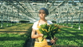 Happy woman holds a bucket with tulips and walks inside a greenhouse. 49596945