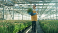 Greenhouse worker smiles while walking with tulips in hands. 49596947