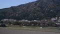 桜 さくら サクラ ソメイヨシノ 咲く 春 季節 サクライメージ 桜イメージ 花見 49639599