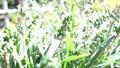 緑の実 植物 自然 アウトドア 実 49639728