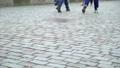 Old cobblestone pavement 49644967