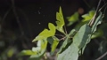 Close up view of beautiful green leaves pouring with water, drops are shining on the sunlight 49689307