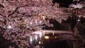 樱花盛开的城崎温泉 49690692