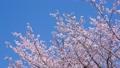 春のイメージ 49717870