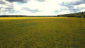 upper view wide meadow covered with yellow dandelions 49728462