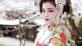 舞妓 舞妓さん 女性の動画 49734150
