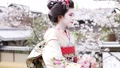 마이코 봄의 교토 49734155