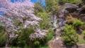 春の古座川町 49736992