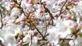 桜のアップ 49746442