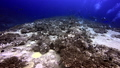 Divers swims near ship wreck covered in coral on Pacific Ocean. 49756188