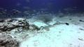 Shark in underwater ocean of Fiji. 49756189