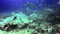 Diver feeds shark in underwater ocean of Fiji. 49756194