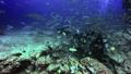 Diver feeds shark in underwater ocean of Fiji. 49756197