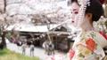 舞妓 舞妓さん 女性の動画 49760702