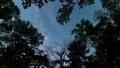 森のなかで見上げた空を動く天の川 49762567