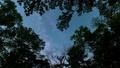 森のなかで見上げた空を動く天の川(タイムラプス) 49762654