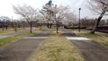 公園の桜 49793862