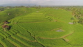 rice fields with agricultural land in indonesia 49816853