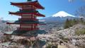 桜咲く新倉山浅間公園・忠霊塔と富士山 49822058