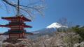 桜咲く新倉山浅間公園・忠霊塔と富士山 49822060