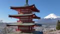 桜咲く新倉山浅間公園・忠霊塔と富士山 49822061