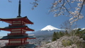 桜咲く新倉山浅間公園・忠霊塔と富士山 49822062