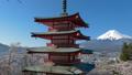 桜咲く新倉山浅間公園・忠霊塔と富士山 49822064