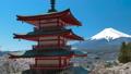 桜咲く新倉山浅間公園・忠霊塔と富士山 49822065