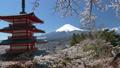 桜咲く新倉山浅間公園・忠霊塔と富士山 49822066