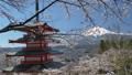 桜咲く新倉山浅間公園・忠霊塔と富士山 49822067
