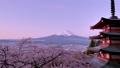 朝焼け 桜咲く忠霊塔と富士山 新倉山浅間公園忠霊塔と富士山 新倉山浅間公園 49822185