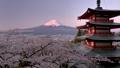 朝焼け 桜咲く忠霊塔と富士山 新倉山浅間公園忠霊塔と富士山 新倉山浅間公園 49822187