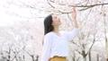 櫻桃女人 49892859