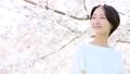 查尋櫻花的婦女 49893141