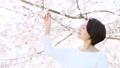 櫻桃女人 49893145
