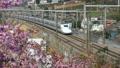 桜と東海道新幹線(音声あり)-091125 50122497