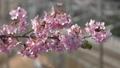桜とメジロ-110243 50122505