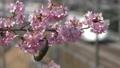 桜とメジロ-110831 50122507