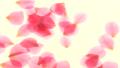 落下する花びら スローモーション 50183524