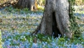 Wild squirrel came down from the tree to the blue and pink flower garden 50254612
