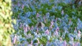 Blue and Pink Flower Garden and Wild Squirrel Feeding in the Middle of the Screen 50254617