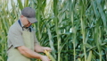 Middle aged farmer working in a field of corn. 50324993
