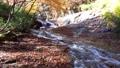 秋天的山谷(福岛县,日本松市)的秋天 50329956