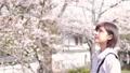 桜と女性のポートレート 50335904