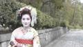 舞妓さんのポートレート 50335907