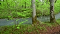 Fresh green on the waterside 50417425
