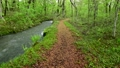 Forest promenade 50417426