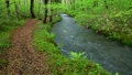 River flowing through the forest 50417428