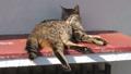 屋根の上でくつろぐ猫 50435384