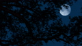 Moon Behind Tree Branches On Windy Night 50441431